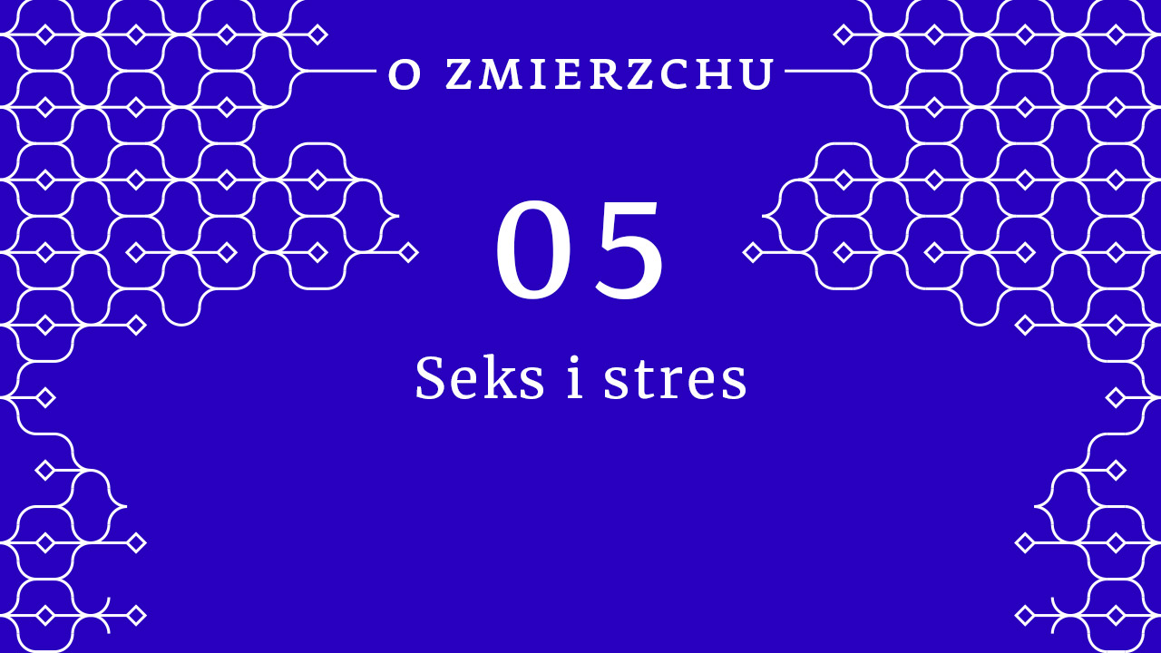 seks i stres